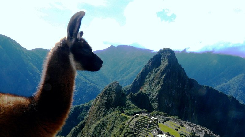 Even the llamas love Machu Picchu, Peru.jpg