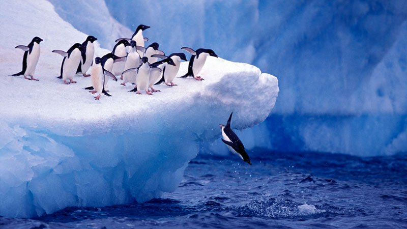 adele-penguins-antarctic.jpg