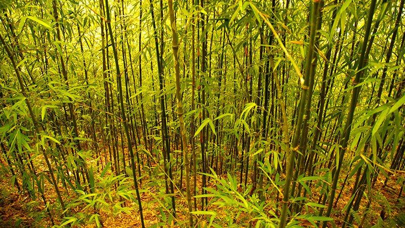 bamboo-forest-sapa-vietnam.jpg