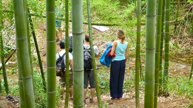 bamboo-moganshan.jpg