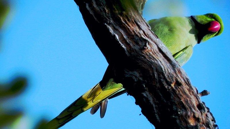 birdlife-in-keoladeo-national-park.jpg