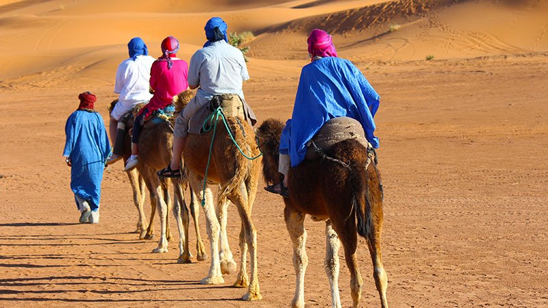 camels-desert-morocco.jpg