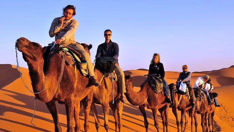 camels-merzouga-morocco.jpg