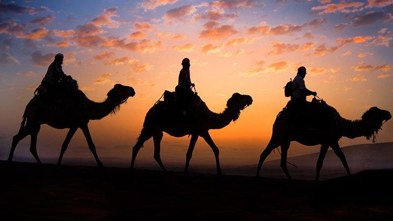 camels-morocco.jpg