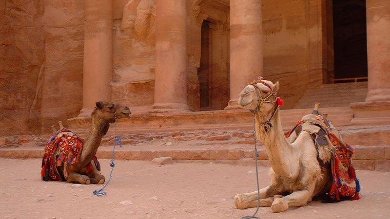 camels-petra-jordan.jpg