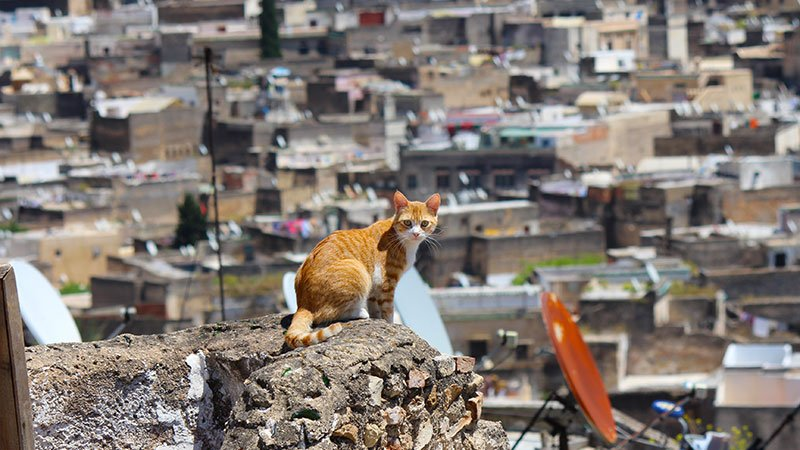 Cat in Fez, Morocco
