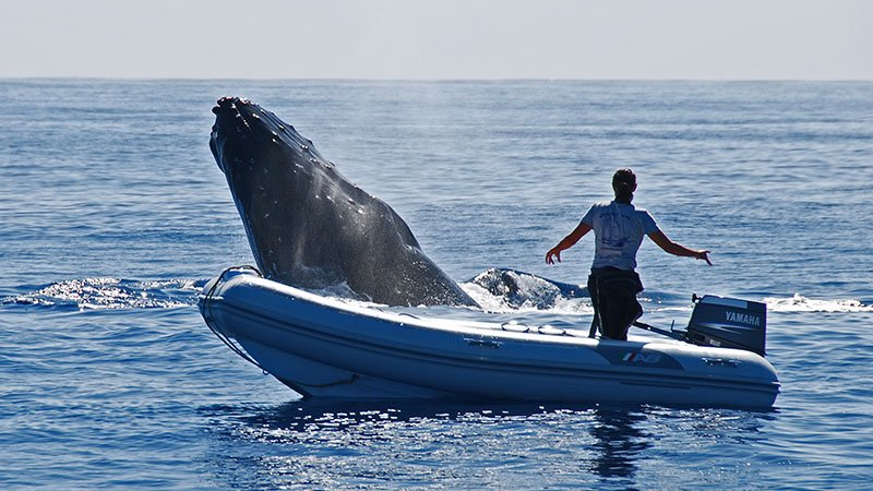 close-encounter-with-a-humpback-whale-tonga.jpg