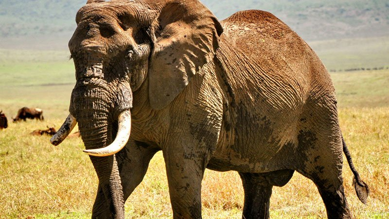 elephant-serengeti-tanzania.jpg