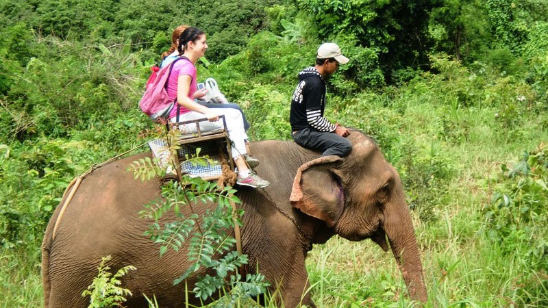 Chiang Mai Elephant Tour Price
