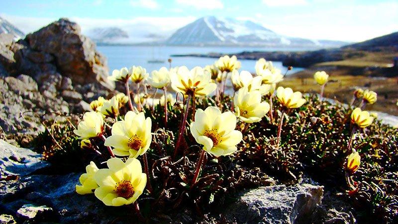 flowers-arctic.jpg