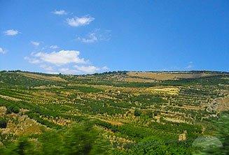 Kibbutz visit (Tiberias)