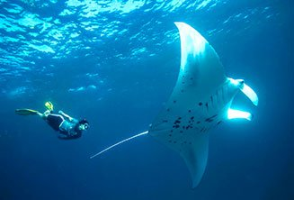 Manta Ray boat trip from Maafushi