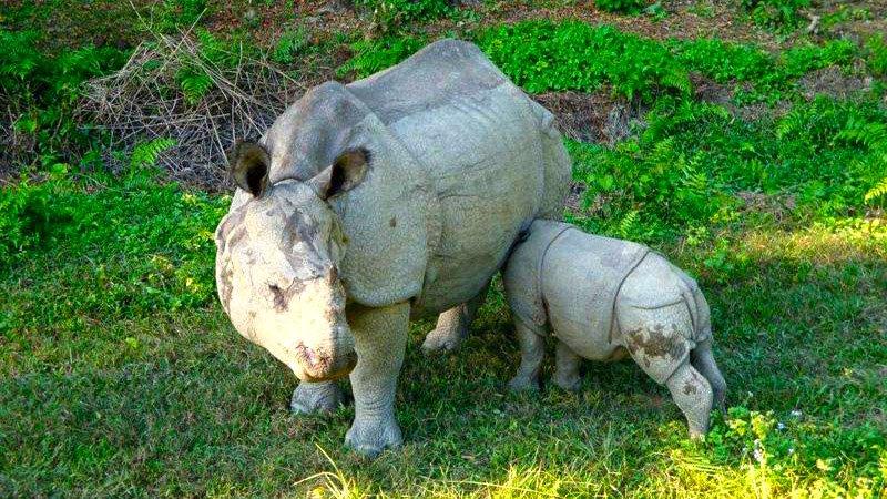 rhinos-chitwan-nepal.jpg