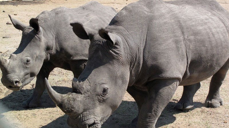 rhinos-etosha-namibia.jpg