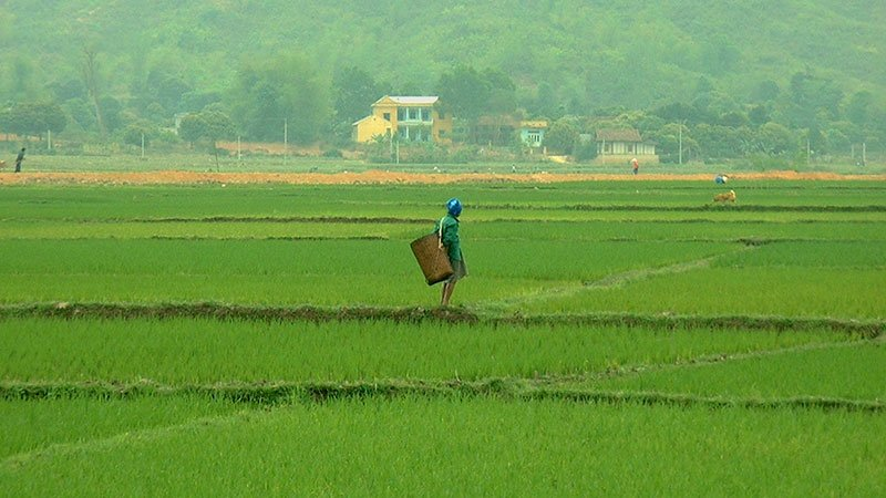 rice-fields-vietnam.jpg